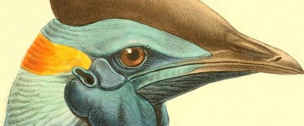 Bird3-600x250